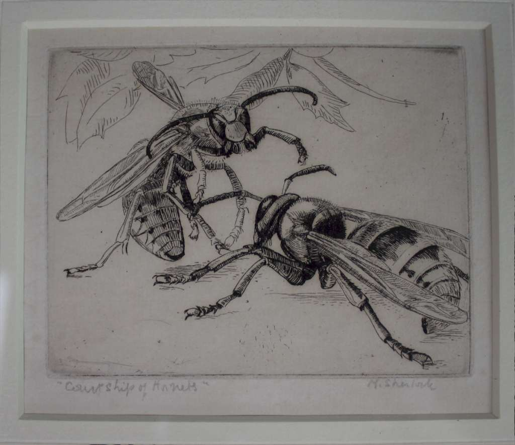 Signed etching by Marjorie Sherlock. Hornets.